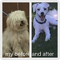 Adopt A Pet :: Adopted!!Elliot - IL - Tulsa, OK