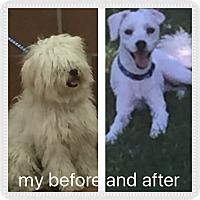 Adopt A Pet :: Elliot - IL - Tulsa, OK