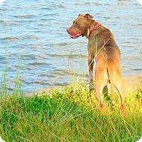 Adopt A Pet :: Lindsey - Harrisville, RI