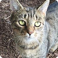 Adopt A Pet :: Lily - Ardsley, NY