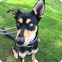 Adopt A Pet :: Felicia - Scottsdale, AZ