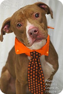 Pit Bull Terrier Mix Dog for adoption in Newnan City, Georgia - Hank