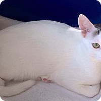 Adopt A Pet :: Bandit - Bristol, CT
