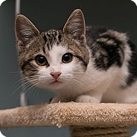 Adopt A Pet :: Elmo - Toronto, ON