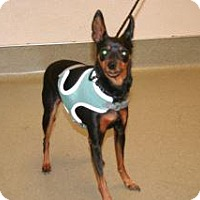 Adopt A Pet :: Chance - Wildomar, CA