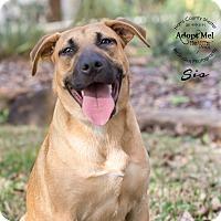 Adopt A Pet :: Sis - Houston, TX