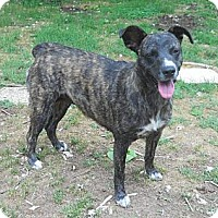 Adopt A Pet :: Lottie - Centerville, TN