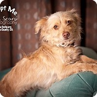 Adopt A Pet :: Fancy - Tustin, CA