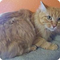 Adopt A Pet :: Princess Anna - Ennis, TX