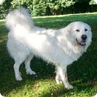 Adopt A Pet :: Lenny - Staunton, VA