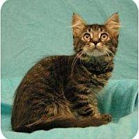 Adopt A Pet :: Punchy - Sacramento, CA