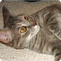 Adopt A Pet :: Sunshine - Colmar, PA