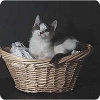 Adopt A Pet :: Luigi - Encinitas, CA