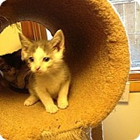 Adopt A Pet :: Tilly's Girls - Richfield, OH