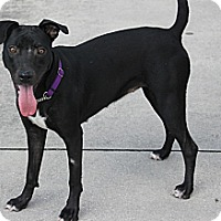 Adopt A Pet :: Sweet Pea - Lake Worth, FL