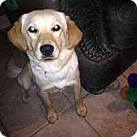 Adopt A Pet :: Rioja - Evergreen, CO