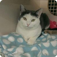 Adopt A Pet :: Tinkerbell - Stafford, VA