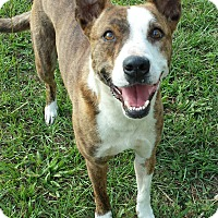 Adopt A Pet :: Tessa - Williston, FL