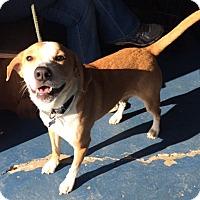 Adopt A Pet :: Charley - Rockaway, NJ