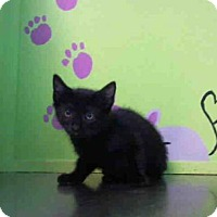 Adopt A Pet :: BIBI - Houston, TX