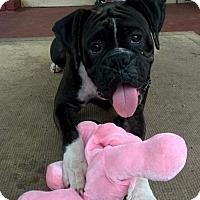 Adopt A Pet :: Esme - Hurst, TX