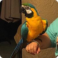 Adopt A Pet :: Tequila - Tampa, FL