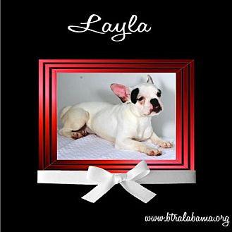 French Bulldog Dog for adoption in Alabaster, Alabama - Layla