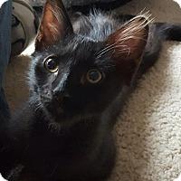 Adopt A Pet :: Beast - Tucson, AZ