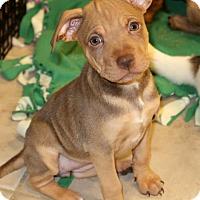 Adopt A Pet :: Chloe - Burbank, OH
