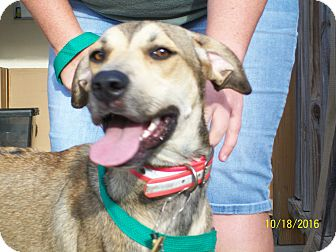 Hound (Unknown Type)/Black Mouth Cur Mix Dog for adoption in Mexia, Texas - Ariel
