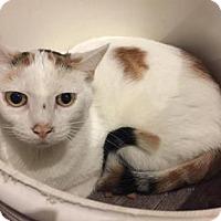 Adopt A Pet :: Tinker - West Des Moines, IA