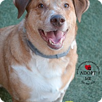 Adopt A Pet :: Roger - Youngwood, PA