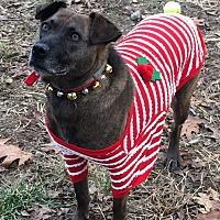 Adopt A Pet :: Sierra - Ozone Park, NY