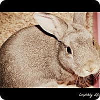 Adopt A Pet :: Tippy - Grandville, MI