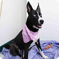 Adopt A Pet :: LAYLA - Oroville, CA
