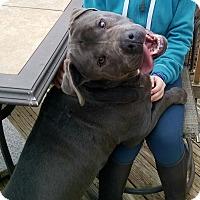 Adopt A Pet :: Hank - Fincastle, VA