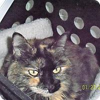 Adopt A Pet :: Lucy - Gunnison, CO