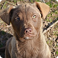 Adopt A Pet :: Taz - Glastonbury, CT