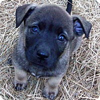 Adopt A Pet :: Apollo - Waller, TX