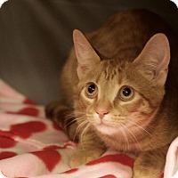 Adopt A Pet :: Gonzo - Homewood, AL