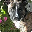 Adopt A Pet :: Se�orita Stella