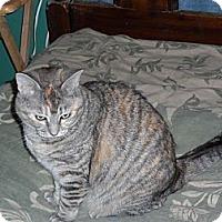 Adopt A Pet :: Lucy - Pensacola, FL
