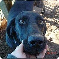 Adopt A Pet :: Jake - Allentown, PA