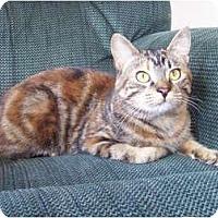 Adopt A Pet :: Giselle - Eagan, MN