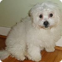 Adopt A Pet :: Pippen - Mooy, AL