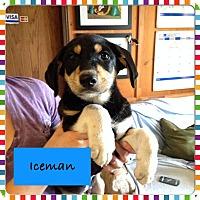 Adopt A Pet :: Iceman - Saskatoon, SK