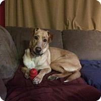 Adopt A Pet :: Leroy - Saskatoon, SK