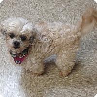 Adopt A Pet :: Minerva - Green Bay, WI
