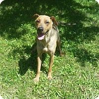 Adopt A Pet :: 1-5 Deisel - Triadelphia, WV