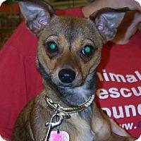 Adopt A Pet :: Latte - Lafayette, LA